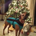Dog Wetsuit
