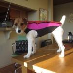 Doggie Wetsuit