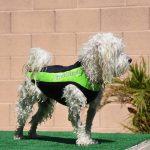 Bruiser in his Doggie Wetsuit