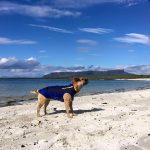 Doggie Wetsuits Scotland