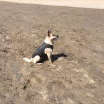 Grey Doggie Wetsuit
