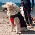 Custom Doggie Wetsuit