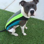4 color doggie wetsuit