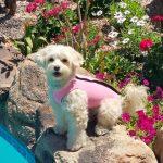 Pink Doggie Wetsuit