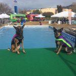 Two Doggie Wetsuit winners