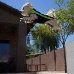Super Bruiser in his Doggie Wetsuit